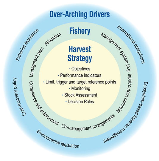 Image is a circular diagram explaining the over-arching drivers of the harvest strategy. Outer circle text - international obligations, ecosystem-based fisheries management, environmental legislation, coast-recovery policy, Fisheries legislation. Middle circle text - management system (e.g. input/output controls) co-management arrangements, compliance and enforcement, management plan, allocation. Inner circle text – objectives, performance indicators, limit, trigger and target reference points, monitoring, stock assessment, decision rules.
