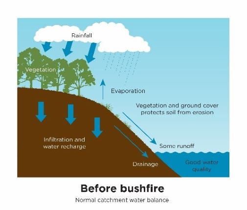 Computer drawn image showing that heavy rain falling on bushfire affected areas creates a large amount of run off into waterways.