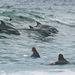 dolphins Bondi thumb